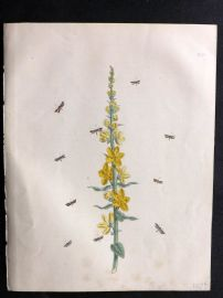 Humphreys & Westwood British Moths 1845 Hand Col Print 121
